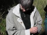 Större ängstrollslända - Sympetrum striolatum - Common Darter