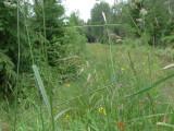 Allmänt gräsmott - Crambus lathoniellus