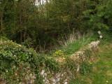 Lidgate Castle,the overgrown moat.