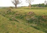 Denham Castle,looking towards the motte.