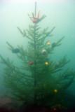 Christmas Tree Dive, December 2006