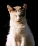 gato tranquilo 2