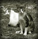 dos gatos mirándote
