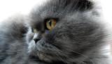 gato peluche