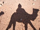 Shadow Camel, Jordan