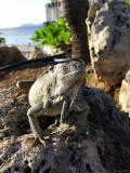 Relaxing in the sun, Bonaire