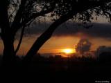 Tree framed sunrise