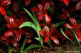 D70-2007-04-03_015.jpg