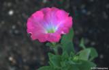 D200-2007-05-28_057.jpg