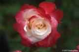 D2x2007-06-09_034.jpg