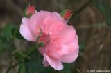 D200-2007-07-16_007.jpg