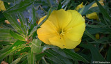 Natural floral arrangement