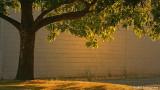 Backlit tree