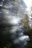 San Josef Trailhead Campsite