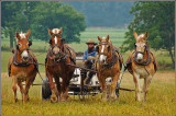 Hommage aux Amish (2007)