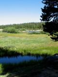 Tuolumne Meadow