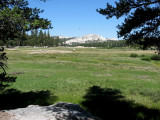 Meadow and Granite Dome