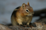 Animal images from Sawtooth, Yellowstone and Grand Teton in Sept 2006