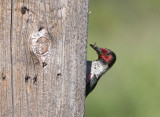 Other Birding Field Trips