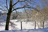 Winter story in Limousin