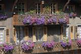 Balcon plus que fleuri...