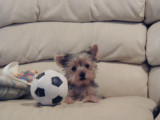 Zoe with her new Soccor Ball