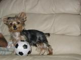 Zoe Soccer Ball