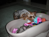 Zoe Digging in her Toy Box
