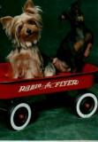 Zoe & Zena riding Red Wagon