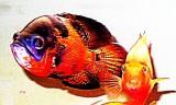 Aquarium Fish-Computer Processing