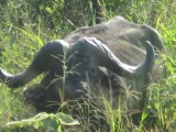 Africa-0008.jpg