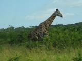 Africa-0009.jpg