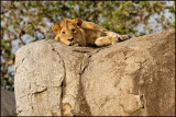 Serengeti National Park day 1