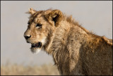 Ngorongoro Crater day 1