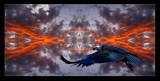 return of the condor...
