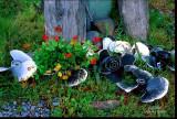 prop flowers