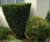 shrub abuse