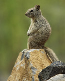 mandatory squirrel photo