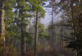 Pine Ridge woods scene.jpg