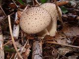 Mushroom I (DSCF0149d.jpg)
