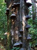 Mushroom VI (DSCF0172d.jpg)
