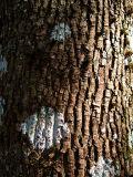 Bark III (DSCF0186d.jpg)