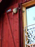 Wasp's Nest (DSCF0188d.jpg)