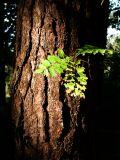 Leaf II (DSCF0250d.jpg)