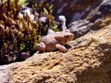 sun basking toad