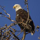 USA, September 2007
