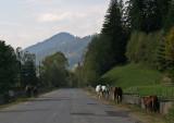 horses at the road
