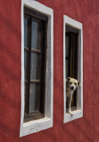 Twin windows and dog