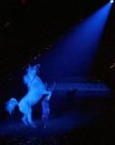 Arabian Nights, Jan. 2007