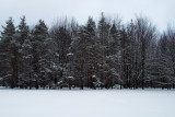 The Winter Tree Line